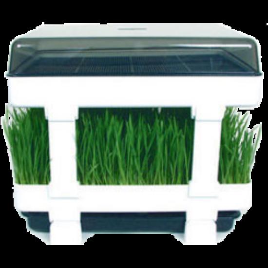 Healthy Sprouter csíráztató tálca búzafű termesztéshez