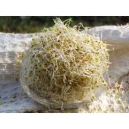 Ruccola - lucerna csíra - bio